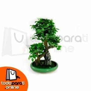 Bonsai Sintético Moyogi M4